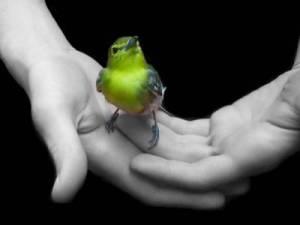 Freedom_Yellow_Bird_in_Hands